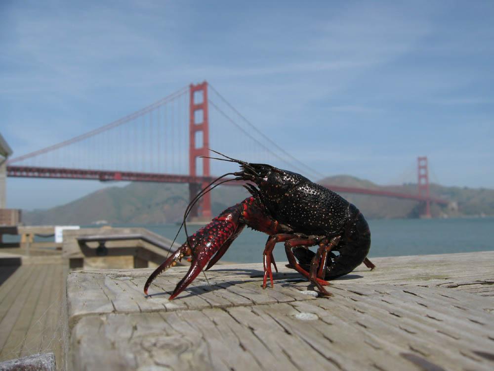 Crawfish Order Online